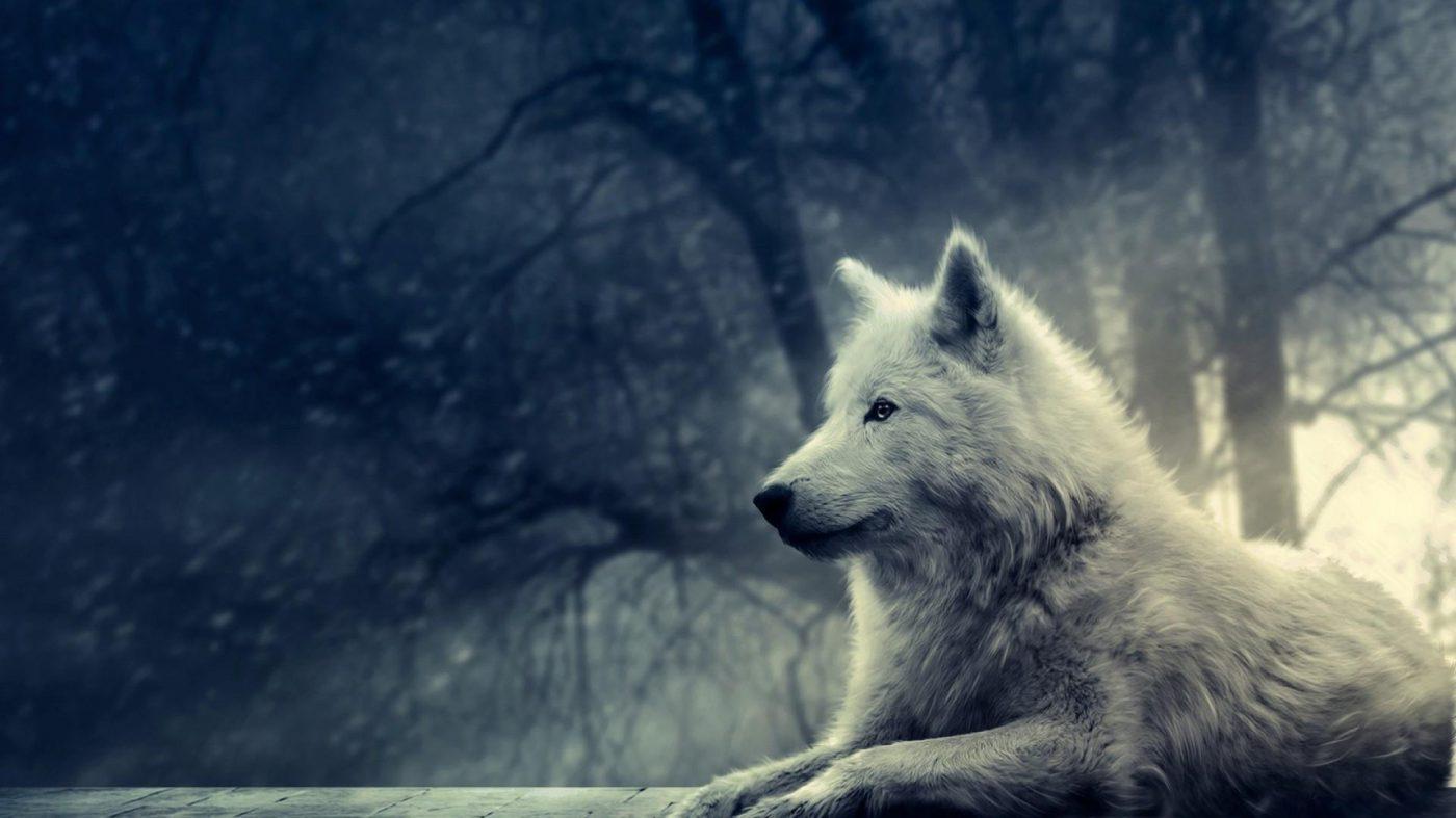 Wolfie's Diary